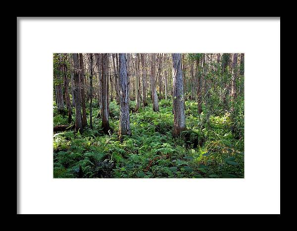 Woods Framed Print featuring the photograph Nature's Heartbeat by Dario Boriani