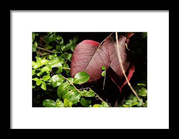 Nature Framed Print featuring the photograph Nature's Red Velvet by Christine Townsend