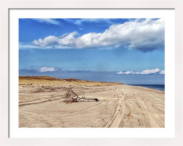 Nauset Beach Driftwood by Constantine Gregory