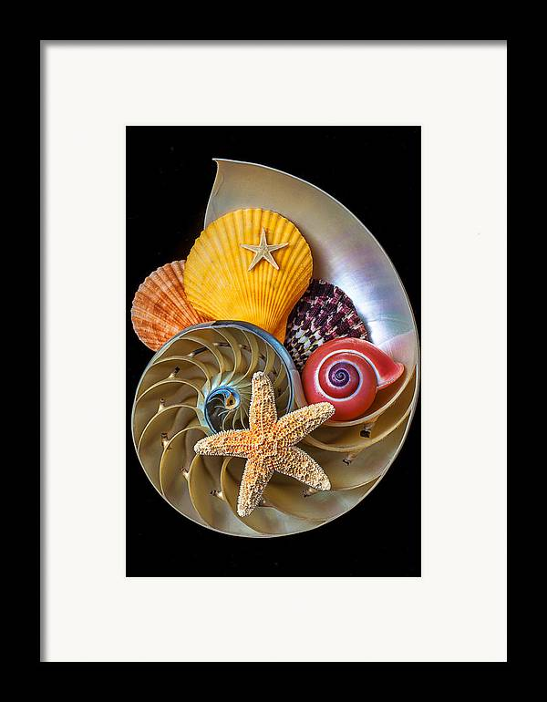 Chambered Nautilus Framed Print featuring the photograph Nautilus With Sea Shells by Garry Gay