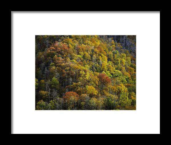 Great Framed Print featuring the photograph Nc Fall Foliage 0559 by Bob Neiman