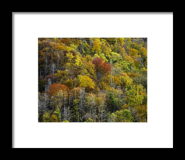 Great Framed Print featuring the photograph Nc Fall Foliage 0561 by Bob Neiman