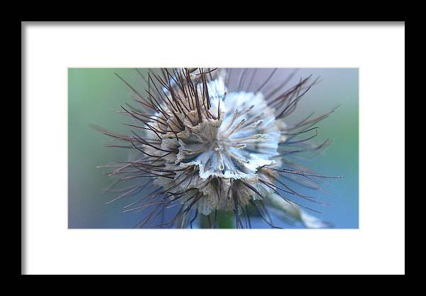 Blue Framed Print featuring the photograph Nearly There by Susie DeZarn