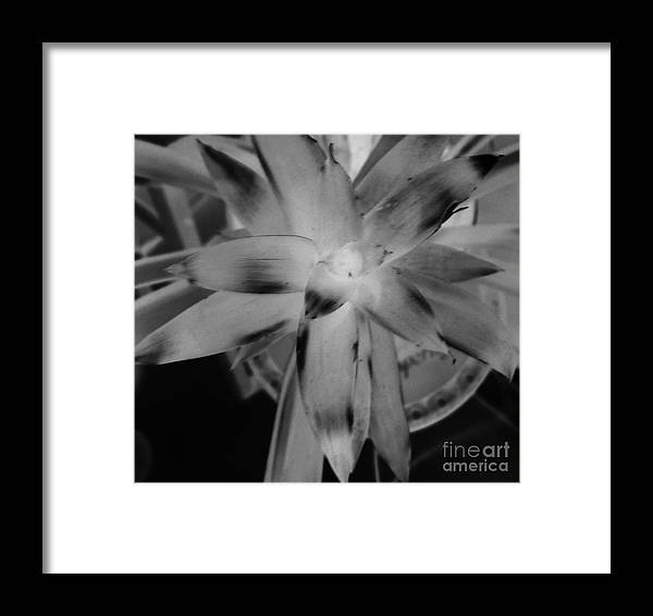 Black And White Framed Print featuring the photograph Negative Bromeliad by Emily Kelley