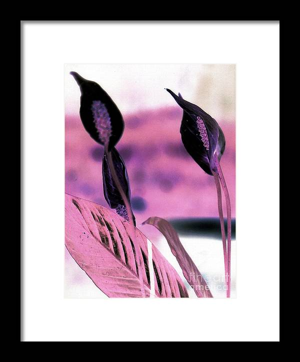 Flowers Framed Print featuring the photograph Negative Peace Lilies by Emily Kelley