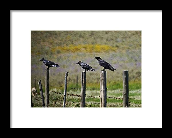 Crows Framed Print featuring the photograph Neighborhood Watch Crows by Heather Coen