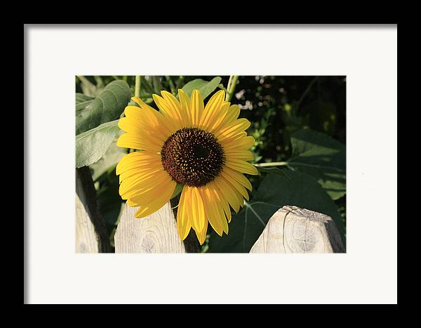Flowers Framed Print featuring the photograph Neighborly Advance by Alan Rutherford