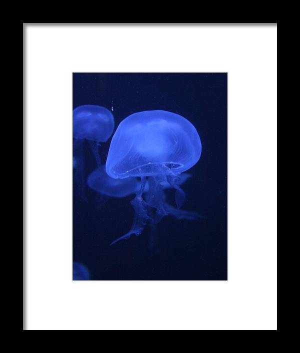 Animal Framed Print featuring the photograph Neon Jelly 1 by David Dunham
