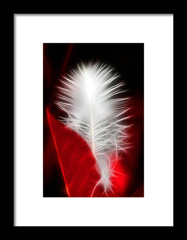 Feather Framed Print featuring the photograph Neon Red Feather by Lesley Smitheringale