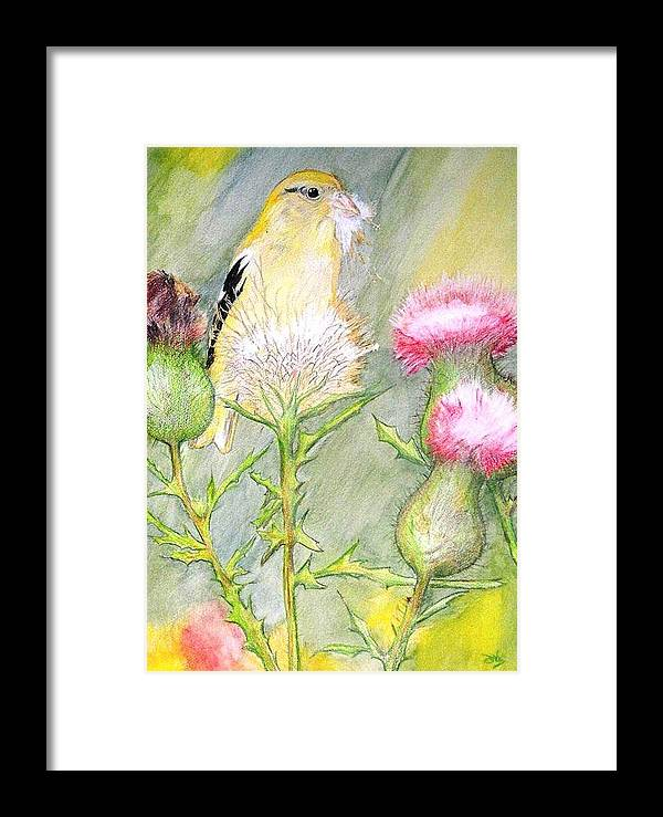 Goldfinch Framed Print featuring the painting Nest Fluff by Debra Sandstrom