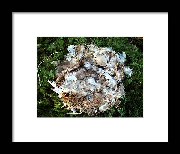 Stil Life Framed Print featuring the photograph Nest In Moss by Heather S Huston