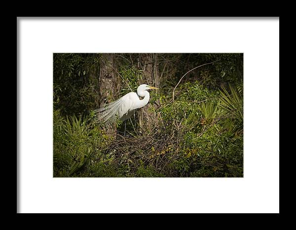 Bird Framed Print featuring the photograph Nesting Beauty by Chad Davis
