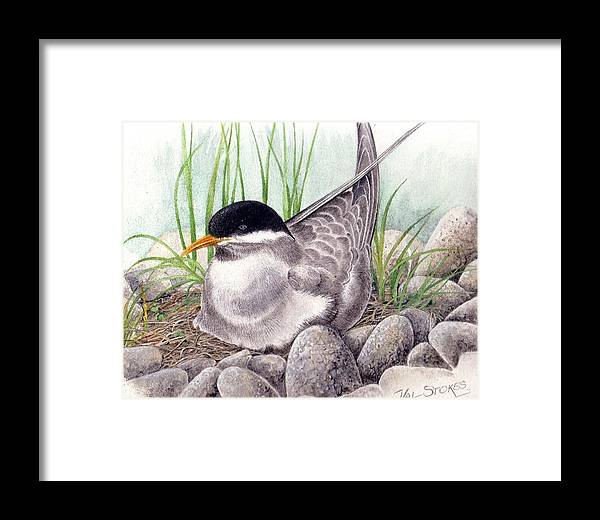 Bird Framed Print featuring the painting Nesting Tern by Val Stokes