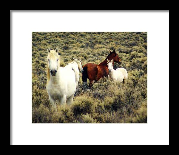 Horses Framed Print featuring the photograph Nevada Wild Horses by Marty Koch