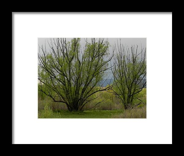 Trees Framed Print featuring the photograph New and Green by Adrienne Petterson