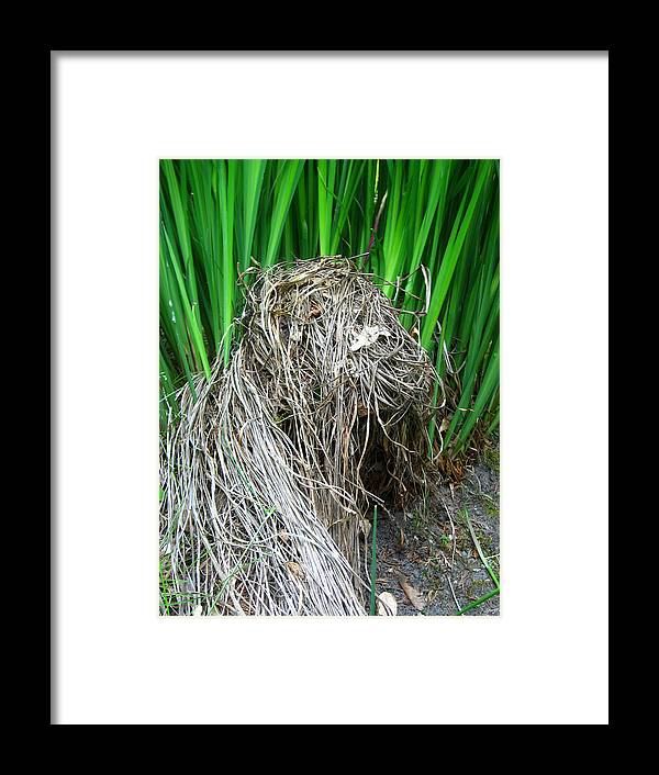 Grass Framed Print featuring the photograph New And Old by Aliza Souleyeva-Alexander