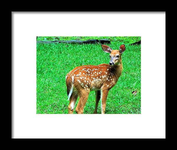 Wildlife Framed Print featuring the photograph New Beginings by Jerry O'Rourke