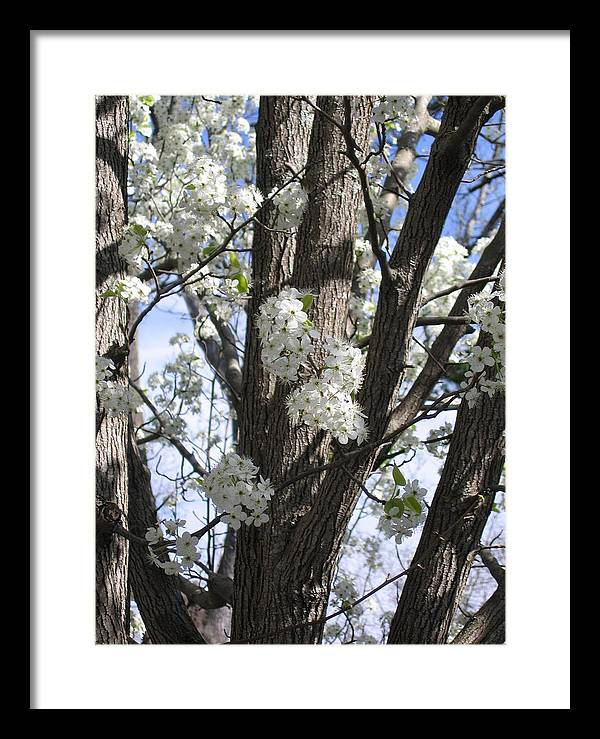 Tree Framed Print featuring the photograph New Beginning by Thomas Kelly