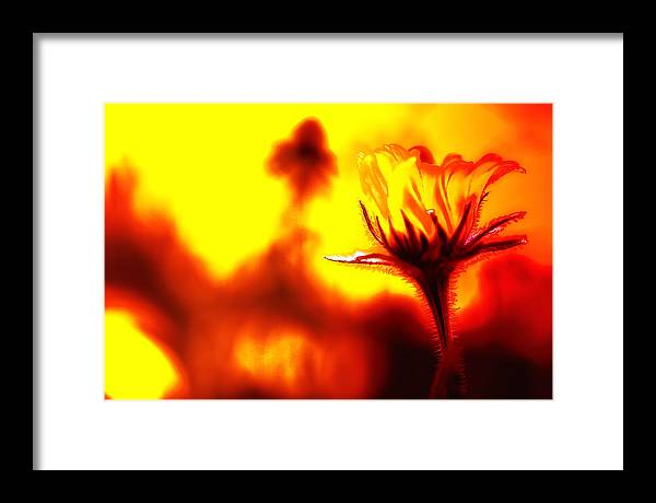 Flower Framed Print featuring the photograph New Bloom by Jim Dohms