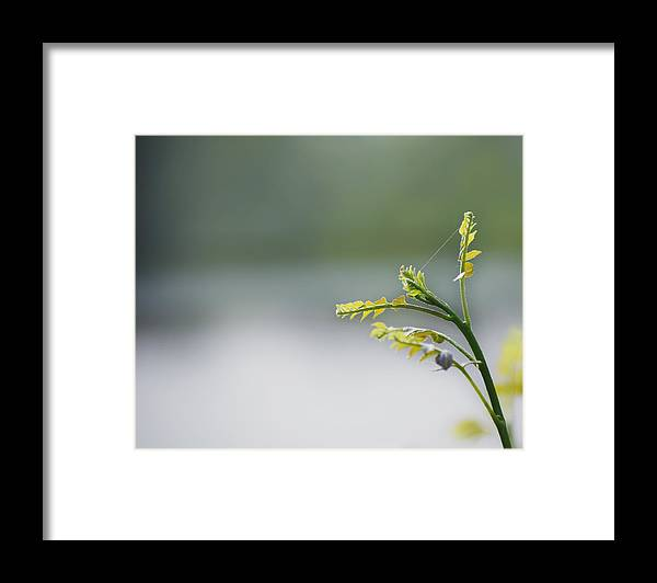 Plant Framed Print featuring the photograph New Born by Aditi Shree