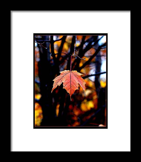 Fall Leaves Framed Print featuring the photograph New England Fall - Lone by William Bray