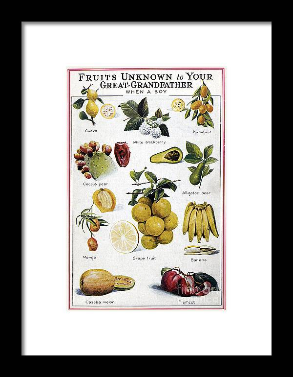 1950 Framed Print featuring the photograph New Fruits, C1950s by Granger
