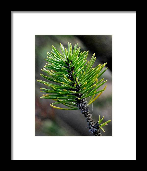 Spring Framed Print featuring the photograph New Growth by Marilynne Bull