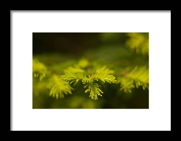 Blur Framed Print featuring the photograph New Growth by R J Ruppenthal