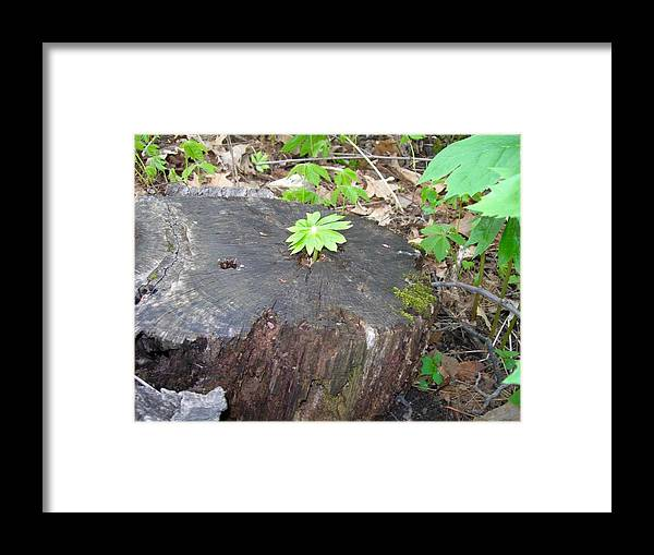 Tree Stump Framed Print featuring the photograph New L Life by Beth Tidd