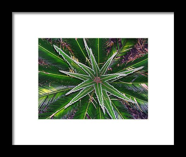 Palm Framed Print featuring the photograph New Palm Leaves by Fred Jinkins