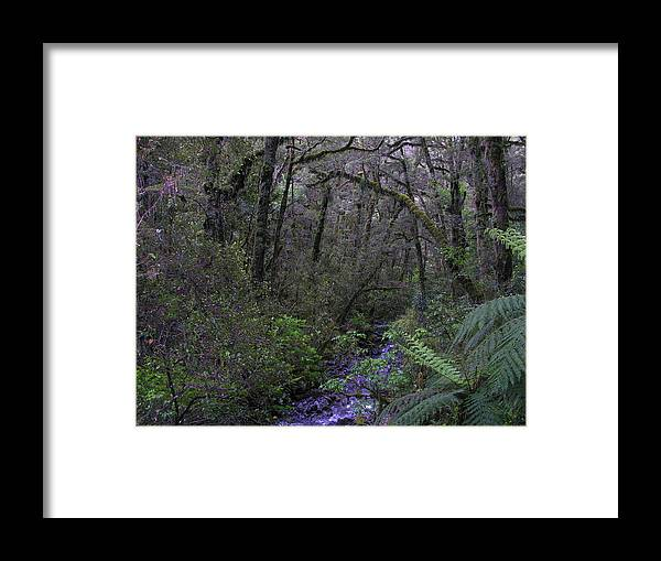 Trees Framed Print featuring the photograph New Zealand by Robert Harris