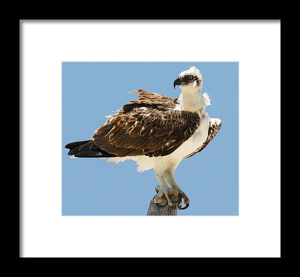 Birds Framed Print featuring the photograph Nice Breeze by Taylor Howe