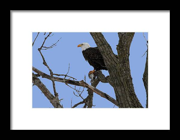 Eagle Framed Print featuring the photograph Nice Catch by Dave Clark