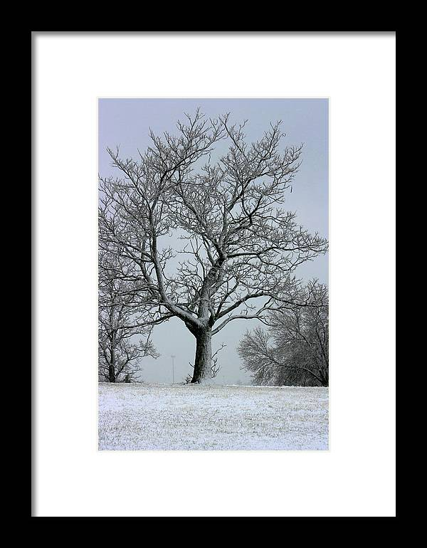 Frost Framed Print featuring the photograph Nicely Frosted by David Dunham