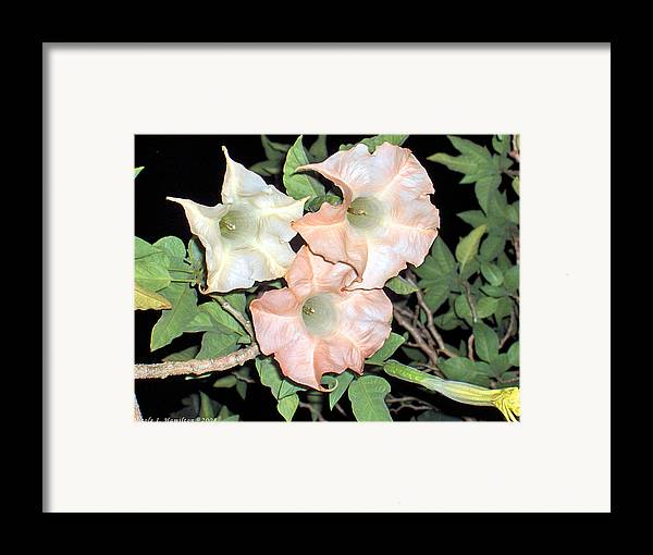 Flowers Framed Print featuring the photograph Night Blooms by Nicole I Hamilton