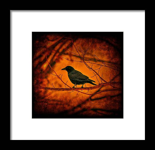 Bird Framed Print featuring the photograph Night Guard by Evelina Kremsdorf