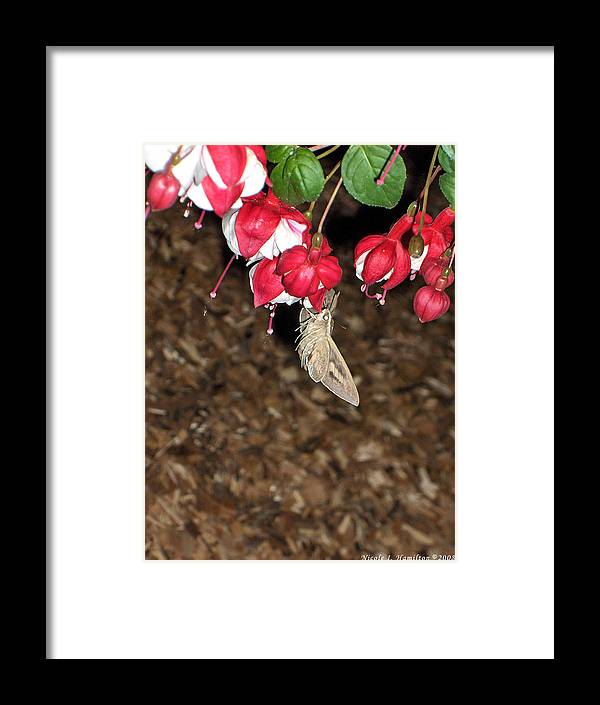 Moth Framed Print featuring the photograph Night Visitor by Nicole I Hamilton