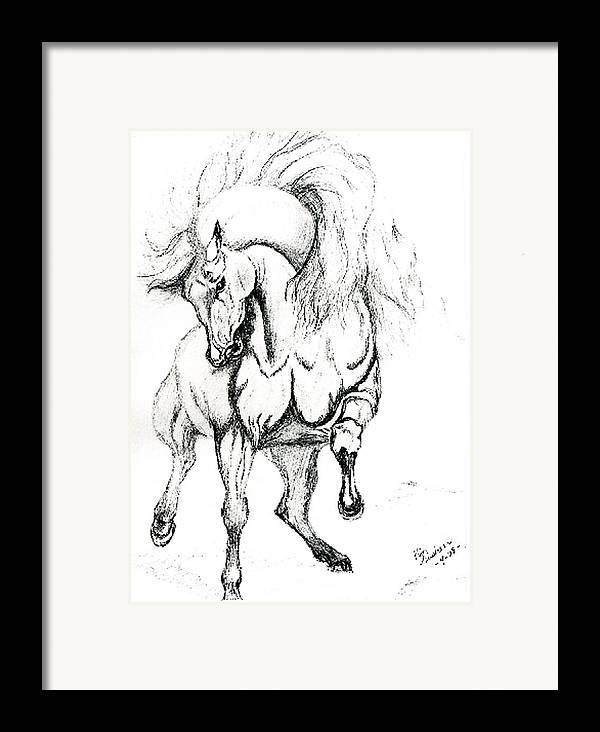 Horses Framed Print featuring the drawing Noble Stallion by Kim Souza