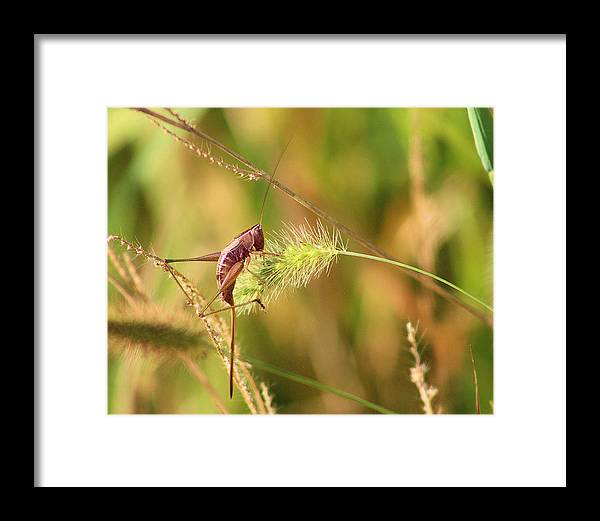 Cricket Framed Print featuring the photograph Noises by Jessica Fronabarger