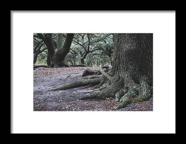 Tree Framed Print featuring the photograph Norfolk Trees by Sarah Jackson