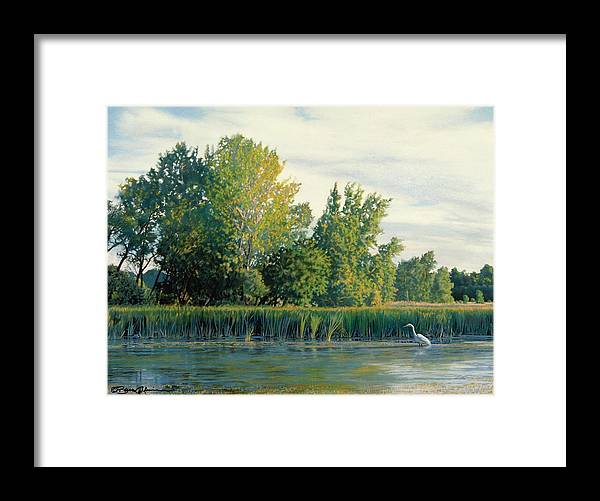 Great Egret Framed Print featuring the drawing North Of The Grade-great Egret by Bruce Morrison