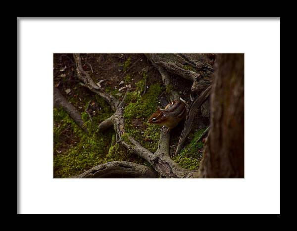 Animal Framed Print featuring the photograph Northern Ohio Chipmunk by Anthony Warner