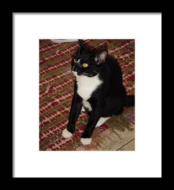 Pet House Cat Framed Print featuring the photograph Nosey II by Edward Wolverton