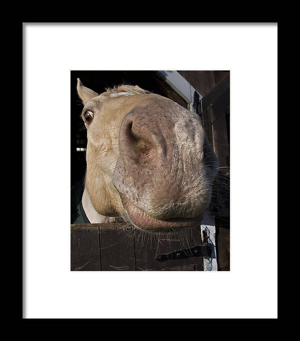 Horse Framed Print featuring the photograph Nosey by Jack Goldberg