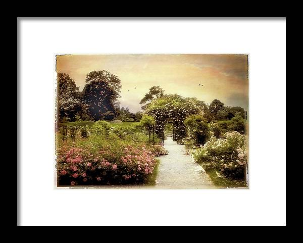 Garden Framed Print featuring the photograph Nostalgia Of Roses by Jessica Jenney