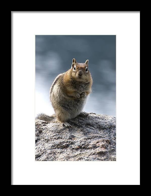 Chipmunk Framed Print featuring the photograph Not Alvin by Richard Henne