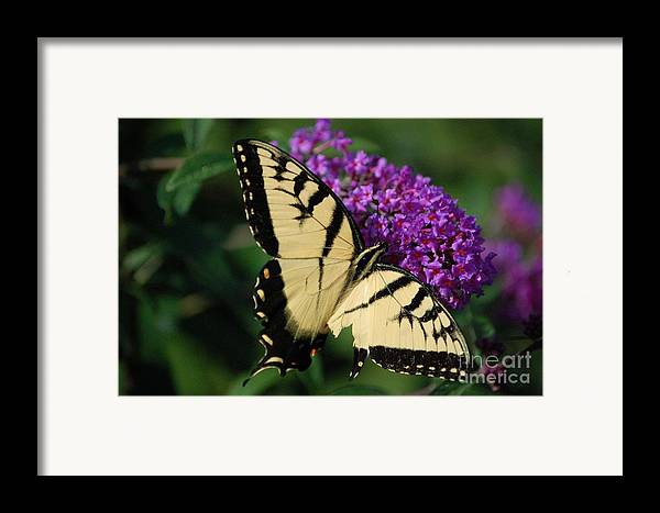 Butterfly Framed Print featuring the photograph Nothing Is Perfect by Debbi Granruth