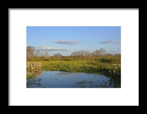 Marsh Framed Print featuring the photograph November by Carol Bradley
