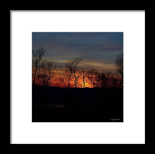 Sunset Framed Print featuring the photograph November Trees by Harry Moulton