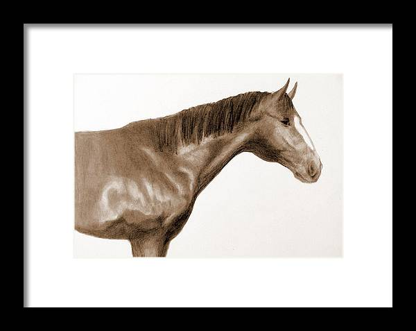 Horses Head Framed Print featuring the drawing Number 3 by Susan Tilley